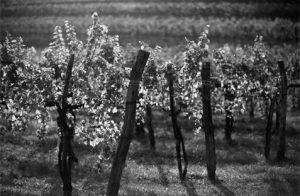 Kabaj Winery